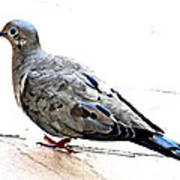 Mourning Dove Art Print