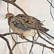Mourning Dove - Sing No Sad Song For Me #2 Art Print