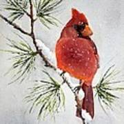 Mr Cardinal Art Print by Bobbi Price