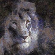 Mr Lion Photo Art 02 Art Print