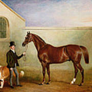 Mr Meakin Holding Sir Robert Peels Chestnut Hunter With His Dogs Hector And Jem Art Print