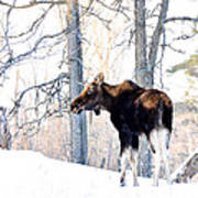 Mr. Moose Art Print