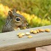 Mr. Squirrel Goes To Lunch Art Print