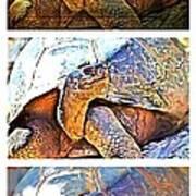 Mr. Tortoise Vertical Triptych Art Print