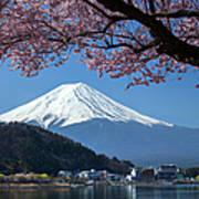 Mt Fuji And Cherry Blossom Art Print