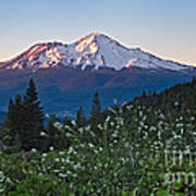 Mt. Shasta At Dawn Art Print