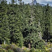 Mt Washington Behind Clear Lake Art Print