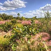 Muhly Grass And Sea Grape Plants Along A Florida Coastline Art Print