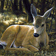 Mule Deer Fawn - A Quiet Place Art Print by Crista Forest