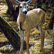 Mule Deer Fawn - Monarch Moment Art Print
