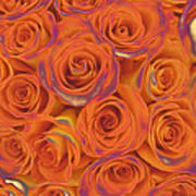 Multi Rose Electric Orange Art Print
