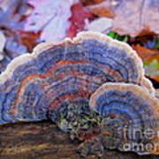 Multicolor Mushroom Art Print