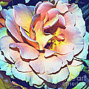 Multicolor Rose Photoart Art Print