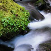 Munson Creek Flows Through The Forest Art Print