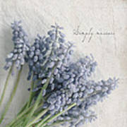 Muscari Art Print by Beverly Cazzell