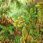 Muscinae Art Print