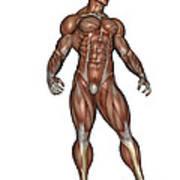 Muscular Man Standing Art Print