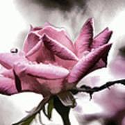 Museum Park Pink Rose Art Print