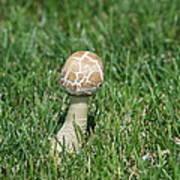 Mushroom 01 Art Print