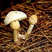 Mushroom 3 Art Print