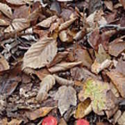 Mushroom And Leaves Art Print