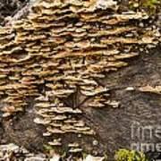 Mushroom Log Art Print