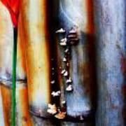 Mushroom On Bamboo 2 Art Print