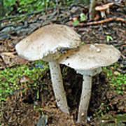 Mushroom Twins - All Grown Up Art Print