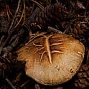 Mushrooms And Pine Combs   #3659 Art Print