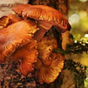 Mushrooms Untitled 2754 Art Print