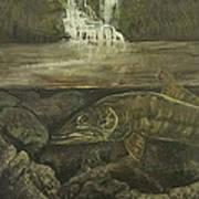 Muskellunge Art Print