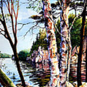 Muskoka Reflections Art Print