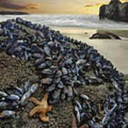 Mussel Beach Art Print