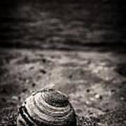 Mussel On The Beach Art Print