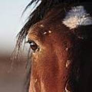 Mustang Battle Wounds Art Print