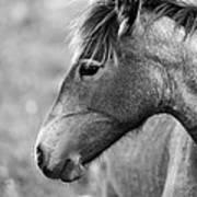 Mustang Close 1 Bw Art Print