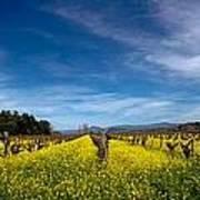 Mustard In The Vineyard 2 Art Print