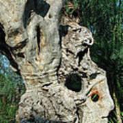 My Best Olive Tree Friend  Home Privat Spain Since 1999 Art Print