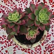 My Garden Series - Mosaica Art Print