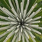 My Giant Sago Palm Art Print by Rebecca Cearley