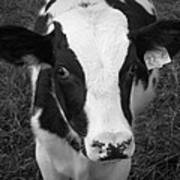 My Name Is Cow - Black And White Art Print