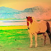 An Old Icelandic Mare, What Is Going On Inside Of Her  Art Print