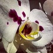 My Orchid Art Print
