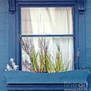 My San Francisco Window Garden Art Print