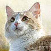 My Squishy Art Print