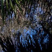 Myakka River State Park Reflections Sarasota Florida Usa Art Print