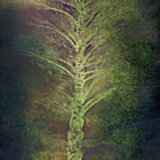 Mysterious Tree In Moonlight Art Print