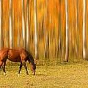 Mystic Autumn Grazing Horse Art Print