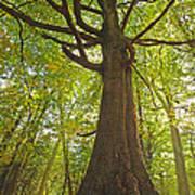 Mystical Forest Tree Art Print
