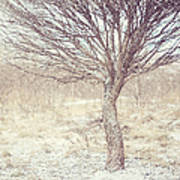 Naked Willow Tree. Winter Poems Art Print